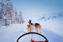 Europe Holidays - Finland, Lapland - view from a dog sled