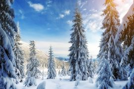 Europe Holidays - Finland, Lapland - Snowy Landscape Pictures
