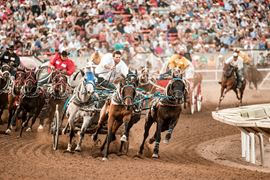 Canada Holidays - calgary stampede rodeo
