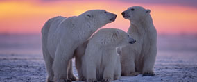 Polar Region Cruises from Barrhead Travel